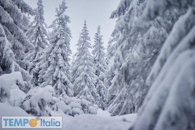 Immagini Natale Neve.Video Meteo Della Neve Del Natale Notizie Meteo Di Tempo